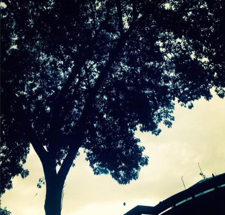 Fotografía: tips para encuadrar árboles y vegetación | paredro.com