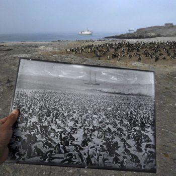 Back in Time captura el contraste entre el presente y el pasado en la población de pingüinos africanos en la isla de Halifax, Namibia.