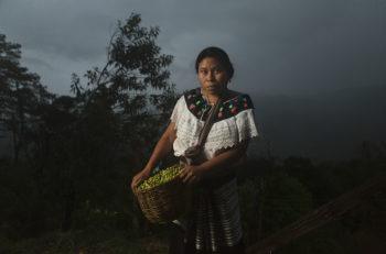 """La producción cafetera en el México es laoctava más grande del mundo. El fotógrafo Giacomo Bruno tituló este retrato como """"The Raw Gold of México: Coffee""""."""