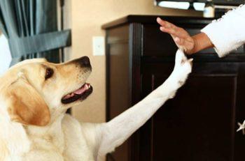 Si piensas aceptar mascotas en tu hotel, debes tomar en cuenta estas 6 consideraciones en la Arquitectura Pet Friendly para diseñar adecuadamente el recinto