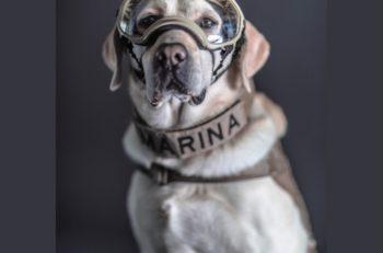 Santiago Arau fotografió a los perritos rescatistas de la Secretaría de Marina que ayudaron en los sismos de 2017 y se podrán descargar gratuitamente.