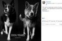 La fotógrafa de perros, Amanda Jones, retrató a un grupo de mascotas cuando eran cachorros para después capturarlos cuando crecieron.