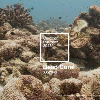 La agencia The Racoons lanzó el Dead Coral Color of The Year 2043, que cree será el verdadero color de éstos animales si no cuidamos el ambiente.