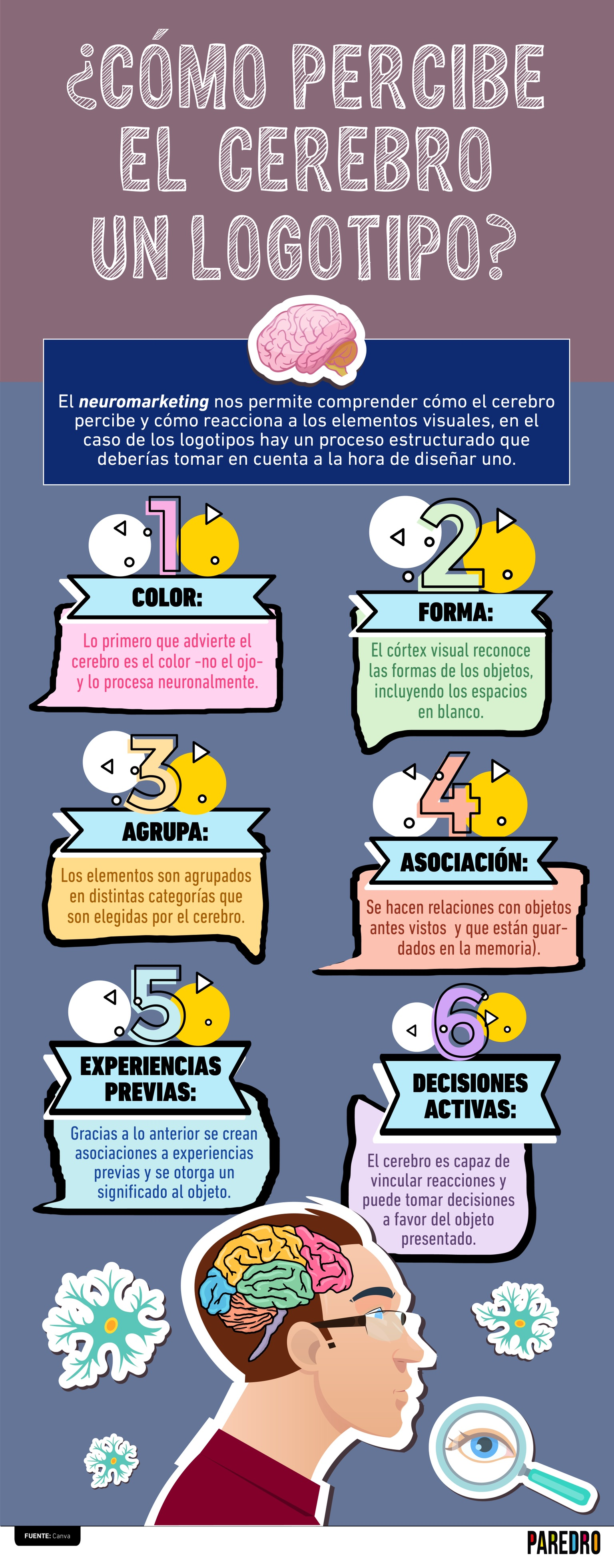 ¿Te has preguntado cómo percibe el cerebro un logotipo? En esta infografía te explicamos los pasos que sigue tu mente para procesarlos.